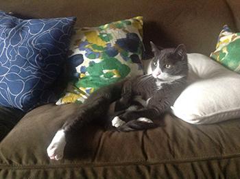 spenser_couch.jpg